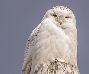birds, nature, and owls image