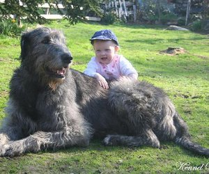 big, dog, and kid image