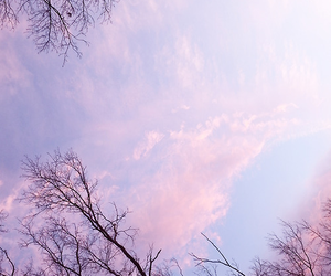 sky, tree, and pink image