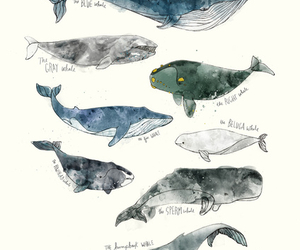 whale, animal, and art image