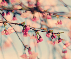 flowers, pink, and blossom image