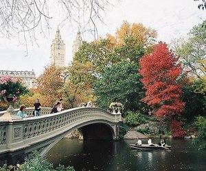 bridge, indie, and nature image