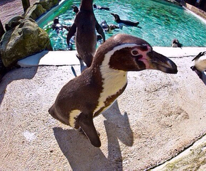 animal, penguin, and zoo image