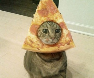 cat, pizza, and cute image