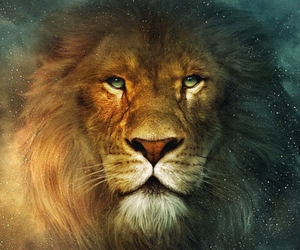beautiful, lion, and narnia image