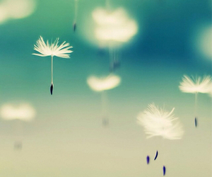 wallpaper, flowers, and dandelion image