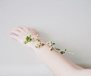 flowers, hand, and photography image