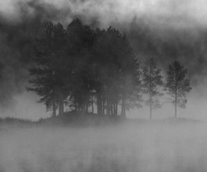 landscape, tree, and black and white image