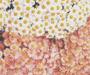 background, flowers, and white image