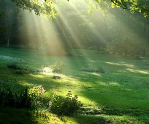 nature, green, and sun image