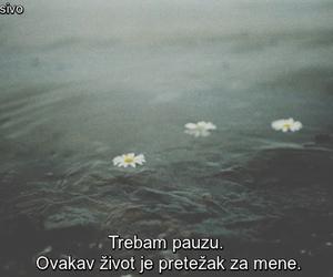 pauzaa and pretesko image