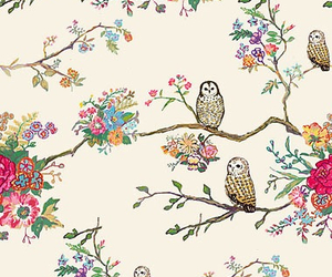 background and owls image