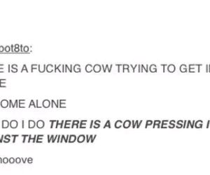 cow, funny, and laugh image