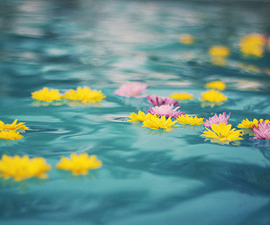 flowers, water, and photography image