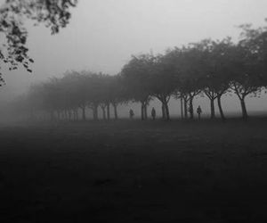 tree, Darkness, and fog image