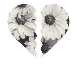 heart, flowers, and broken image