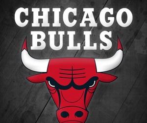 chicago bulls image