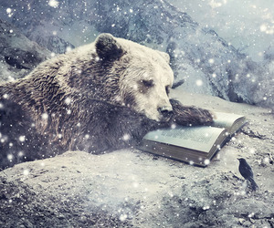 bear, book, and snow image
