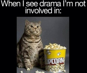 drama, cat, and funny image