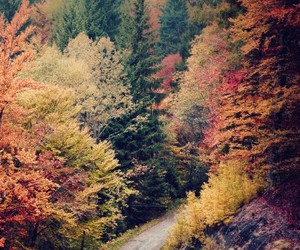 forest, nature, and wonderfull places image