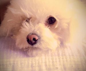 blanca, dog, and tierna image