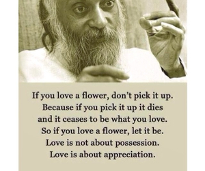 love, flower, and quotes image
