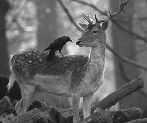 deer, animal, and nature image