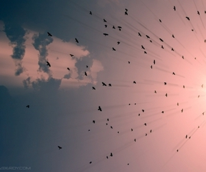 birds, photography, and sky image