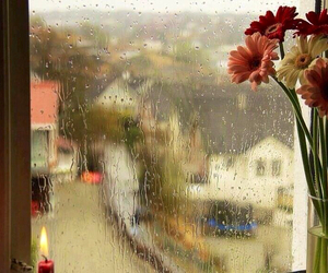rain and flowers image