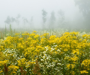 meadow image
