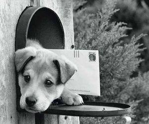 dog, animal, and doggy image