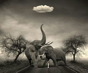 animals, cloud, and black and white image