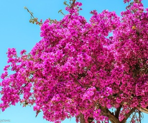flowers and tree image