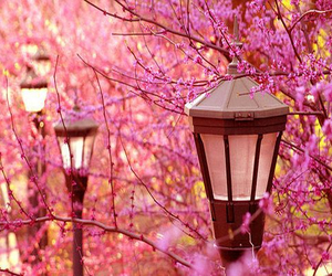 flowers, pink, and lantern image