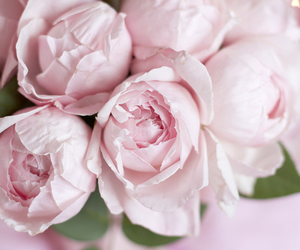 pink and pivoine image