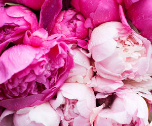 paris, peonies, and pink flowers image