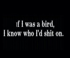 bird, funny, and shit image