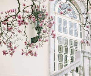 beauty, blossom, and explore image