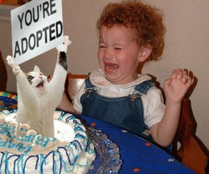 funny, cat, and adopted image