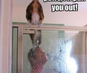 funny, cat, and quotes image