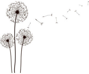 flowers, dandelion, and overlay image