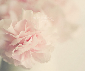 flowers, pastel, and photography image