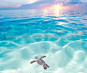 *-*, sea, and sun image