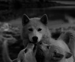 animal, black and white, and kiss image