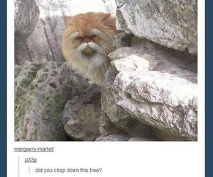 funny, lol, and lorax image