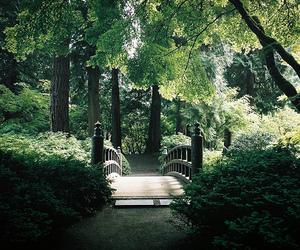 nature, bridge, and tree image