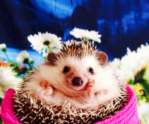 pet, pink, and cute image