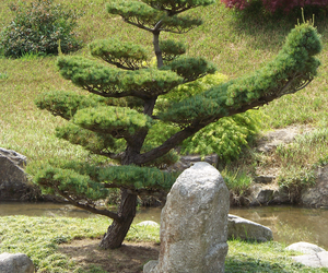france, garden, and japanese image