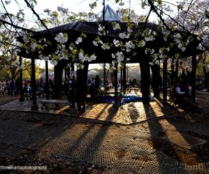 cherry blossom, party, and sun set image