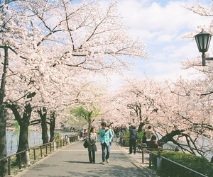 flower, japan, and hanami image